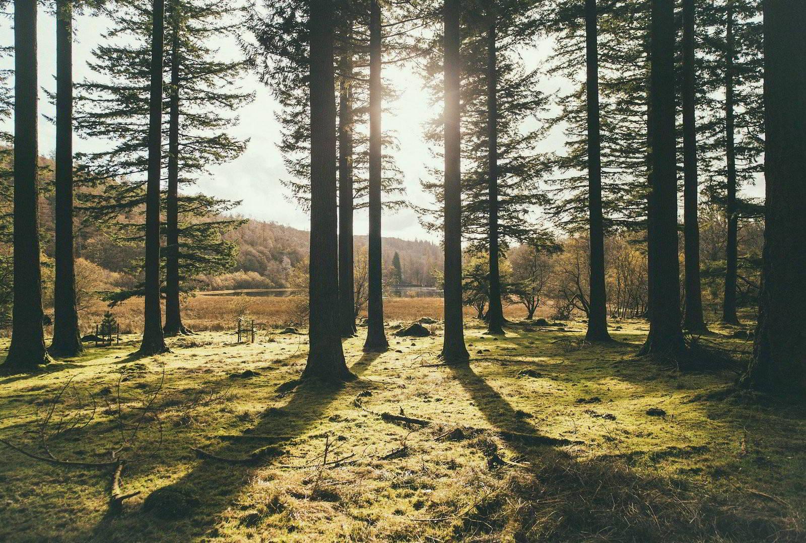 Słoneczna polana w lesie – czyli o poszukiwaniu idealnej działki pod budowę domu
